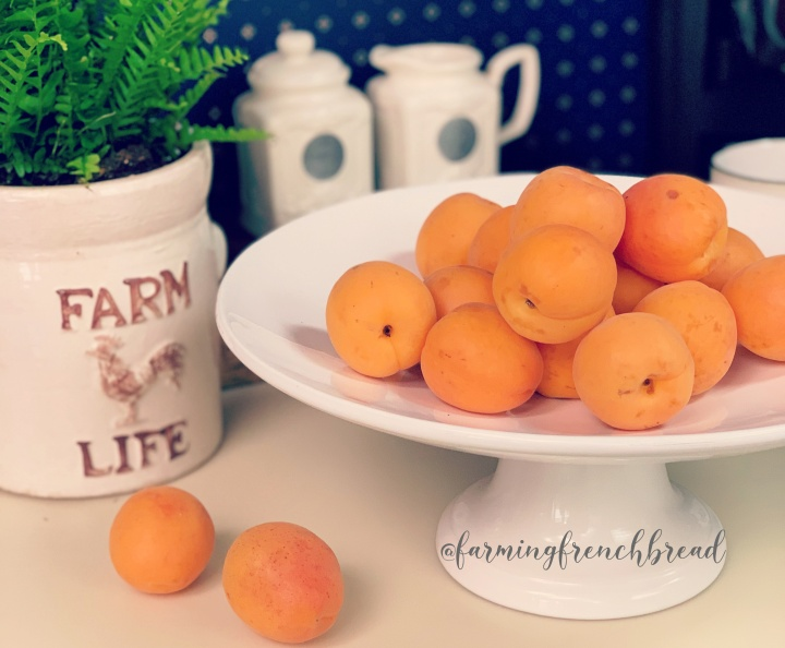 5 Recipes for Fresh Apricots